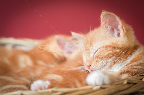 Foto stock: Sonolento · gatinhos · adorável · gengibre · cesta