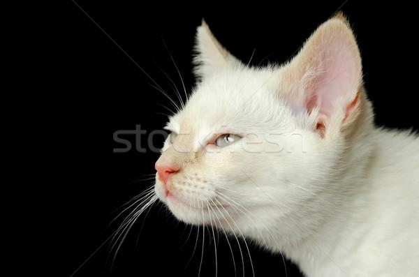 Gatito blanco primer plano negro cara ojos Foto stock © nelsonart