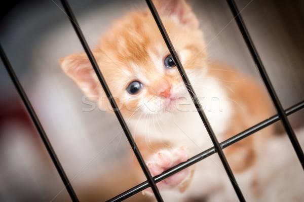 behind bars Stock photo © nelsonart