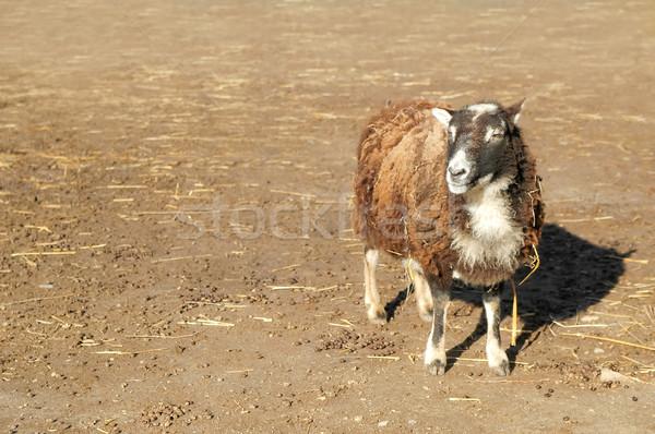 Stock fotó: Birka · űr · szöveg · állat · magányos · mezőgazdaság
