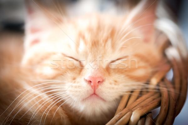Dormir chaton gingembre accent visage Photo stock © nelsonart