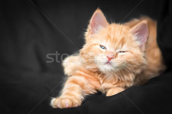 имбирь котенка пушистый черный кошки Сток-фото © nelsonart