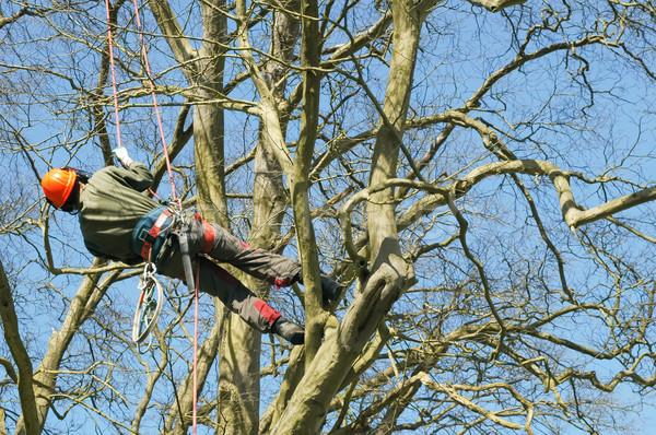 Baum Klettern Holzfäller Natur Bäume Arbeitnehmer Stock foto © nelsonart