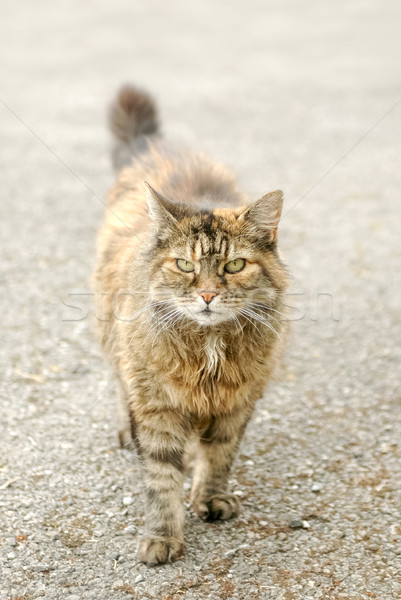 street cat Stock photo © nelsonart