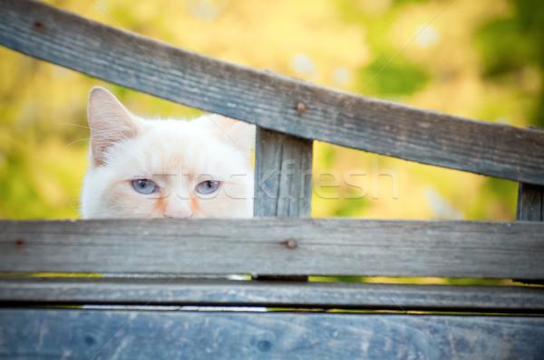Yeux bleus chat mystérieux regarder écart clôture Photo stock © nelsonart