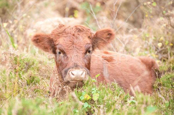 Barna fiatal női testtartás ősz lomb Stock fotó © nelsonart