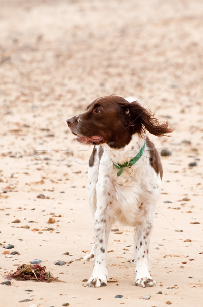 Perro playa perros arena animales playas Foto stock © nelsonart