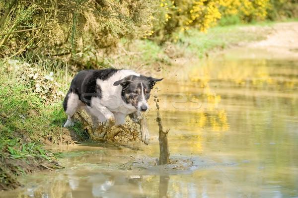 Labda kutya sáros medence víz kutyák Stock fotó © nelsonart