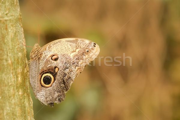 Mariposa hoja otono insectos error Foto stock © nelsonart