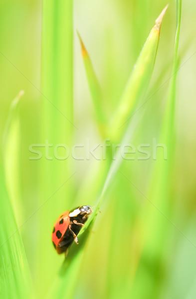 てんとう虫 闘争 緑 動物 バランス ストックフォト © nelsonart