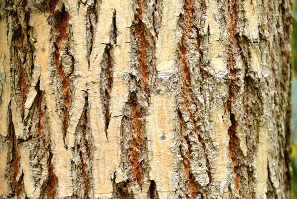 ツリー 樹皮 細部 テクスチャ 抽象的な ストックフォト © nemalo