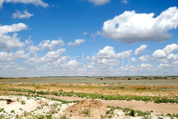 Steppe with hills Stock photo © nemalo