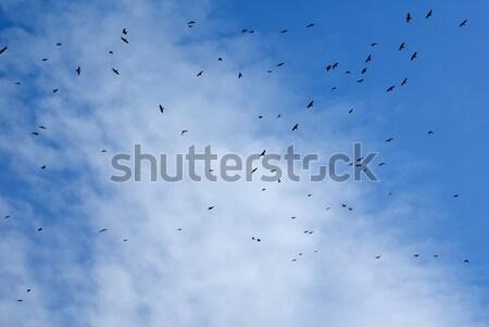 Birds flying in the sky. Stock photo © nemalo
