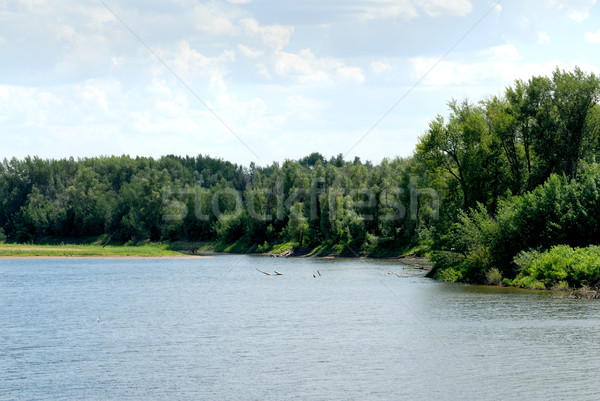 Wood on river coast Stock photo © nemalo