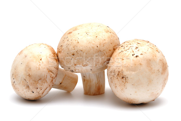 Champignon champignon een witte voedsel natuur Stockfoto © nemalo