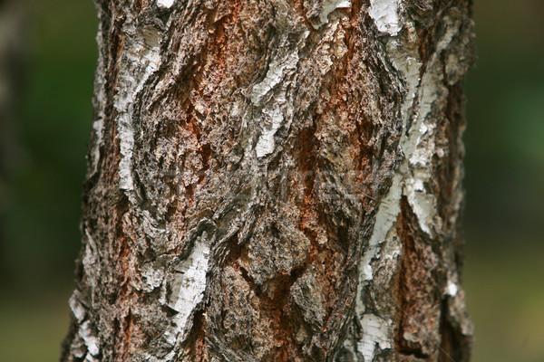 Ugatás textúra minta törés öreg barna Stock fotó © nemar974