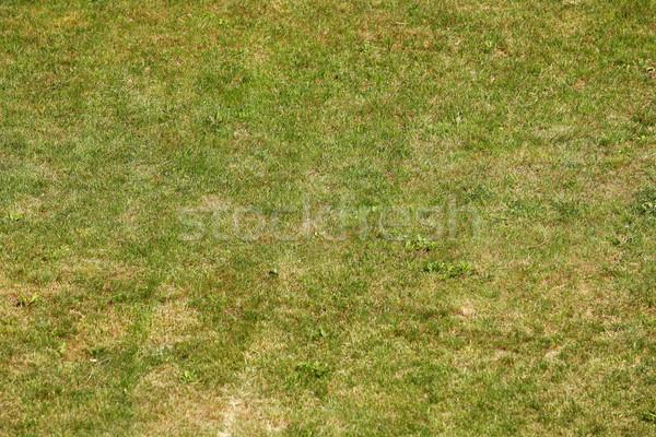 Yeşil ot taze çim manzara alan uzay Stok fotoğraf © nemar974