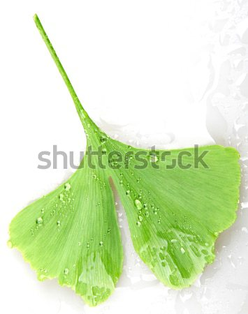 Aloë natuur licht blad groene geneeskunde Stockfoto © nenovbrothers