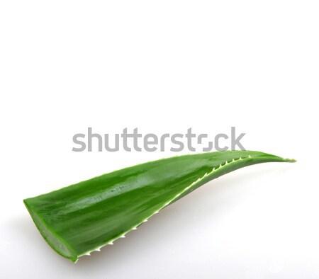Aloe természet fény levél zöld gyógyszer Stock fotó © nenovbrothers
