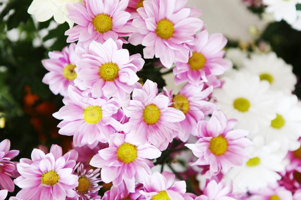 花 花 春 幸せ 自然 光 ストックフォト © nenovbrothers