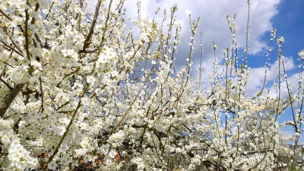 Springtime Stock photo © nenovbrothers