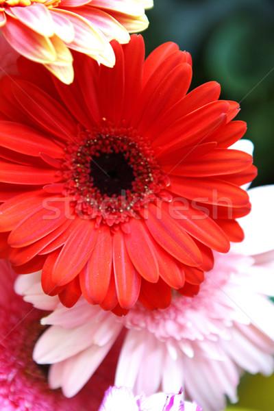 Bloemen store foto tulpen boeket levering Stockfoto © nenovbrothers