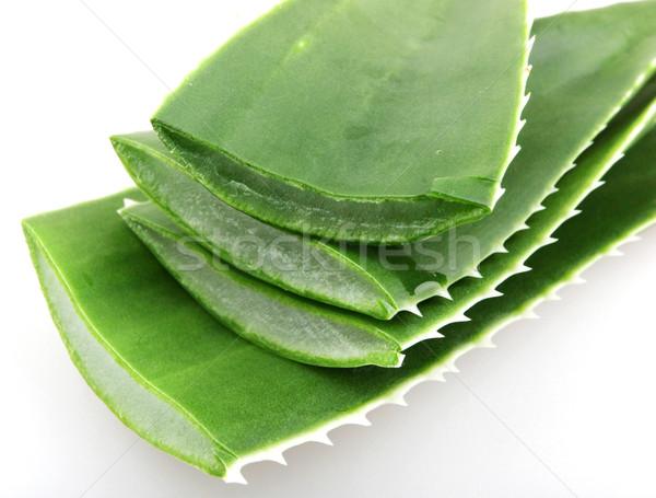 алоэ природы свет лист зеленый медицина Сток-фото © nenovbrothers