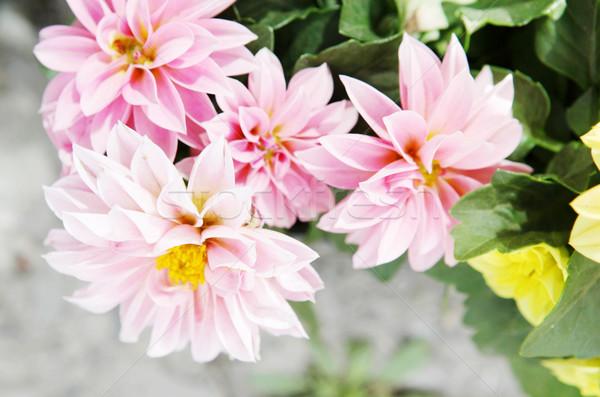 Flores páscoa flor primavera médico natureza Foto stock © nenovbrothers