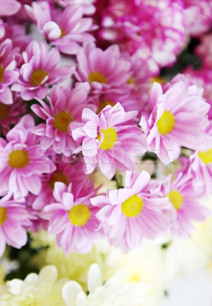 ストックフォト: 花 · 花 · 春 · 幸せ · 自然 · 光