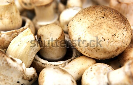 An edible mushroom, especially the much cultivated species Agari Stock photo © nenovbrothers
