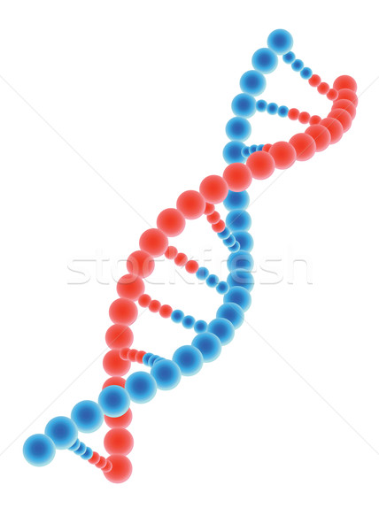 DNA model on white background Stock photo © Neokryuger