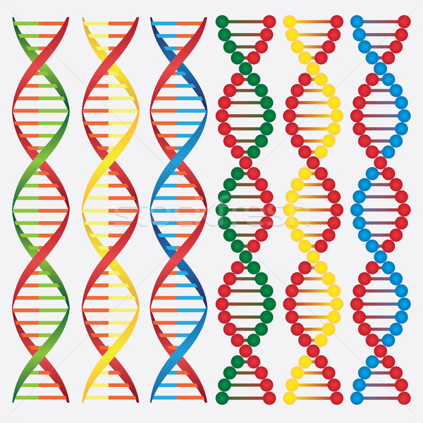 Molecules of DNA. Stock photo © Neokryuger