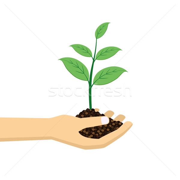 green plant in hand. Stock photo © Neokryuger