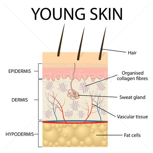 Visual representation of young skin. Stock photo © Neokryuger