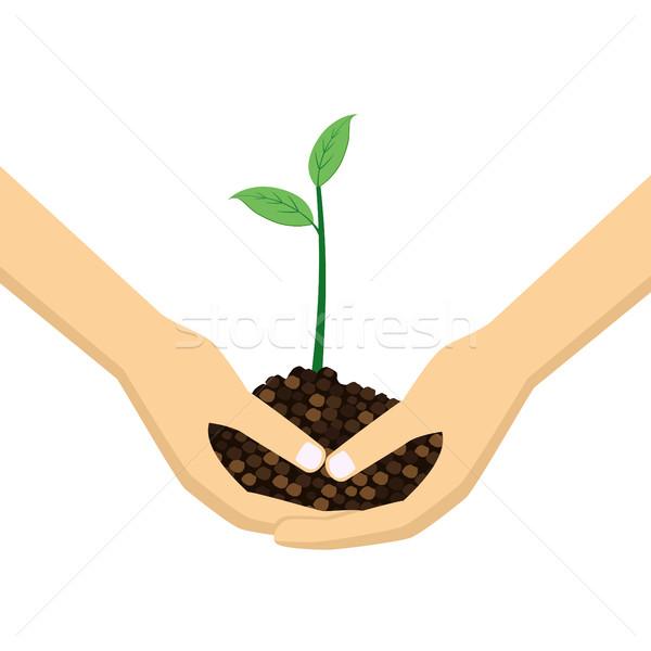 Dwa ręce młodych roślin biały Zdjęcia stock © Neokryuger