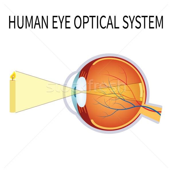 Illustratie menselijke oog optische bal lens Stockfoto © Neokryuger