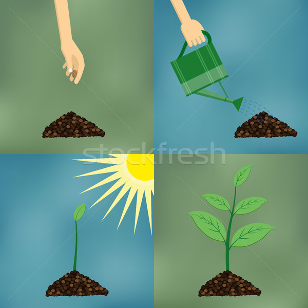Planting process in flat design. Stock photo © Neokryuger