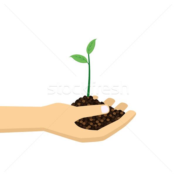 Mão jovem planta verde crescimento Foto stock © Neokryuger