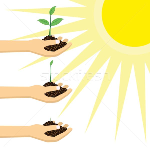 Persoon jonge plant zon groeiend Stockfoto © Neokryuger