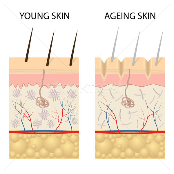 Young healthy skin and older skin comparison. Stock photo © Neokryuger