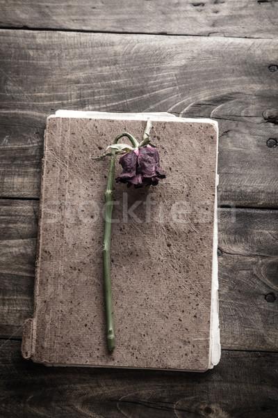 Egy virág klasszikus könyv fa retro antik Stock fotó © nessokv