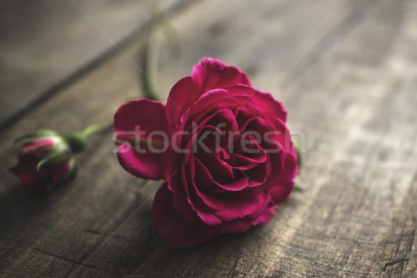 свежие красную розу старые Vintage цветы Сток-фото © nessokv