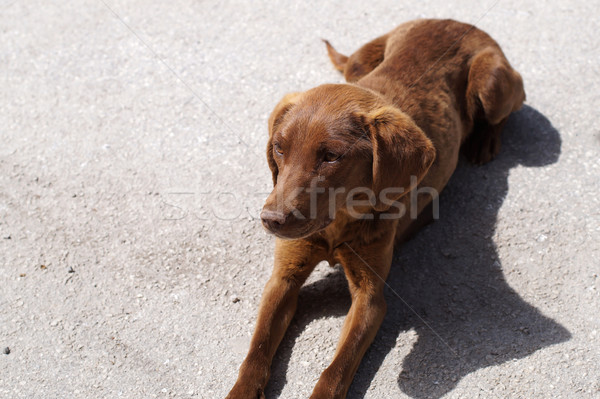 Tired dog lie in a street Stock photo © nessokv