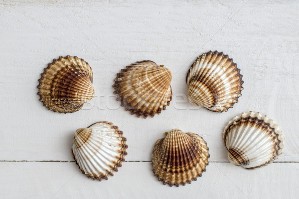 A collection of seashells on a white  background. Stock photo © nessokv