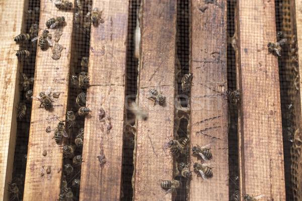 Abeilles abeille ruche cadres Photo stock © nessokv