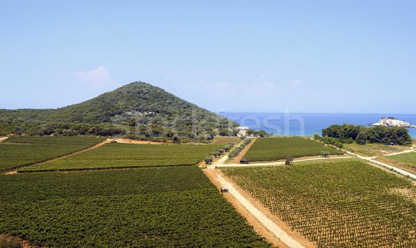Campos mar paisaje azul planta blanco Foto stock © nessokv