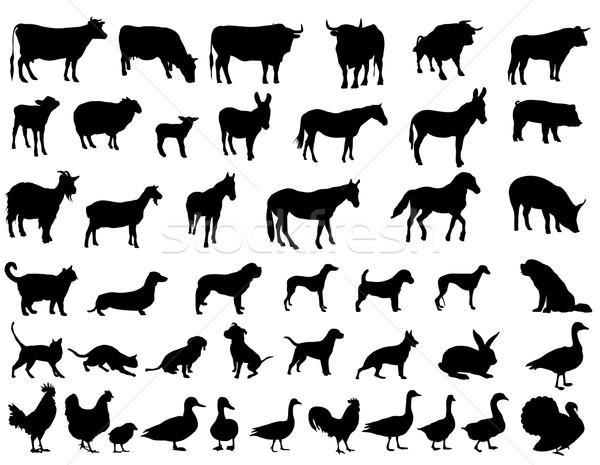 сельскохозяйственных животных природы лошади черный овец Сток-фото © Nevenaoff