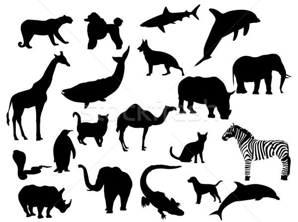 Vahşi hayvanlar siluetleri kedi kuşlar siluet fil Stok fotoğraf © Nevenaoff