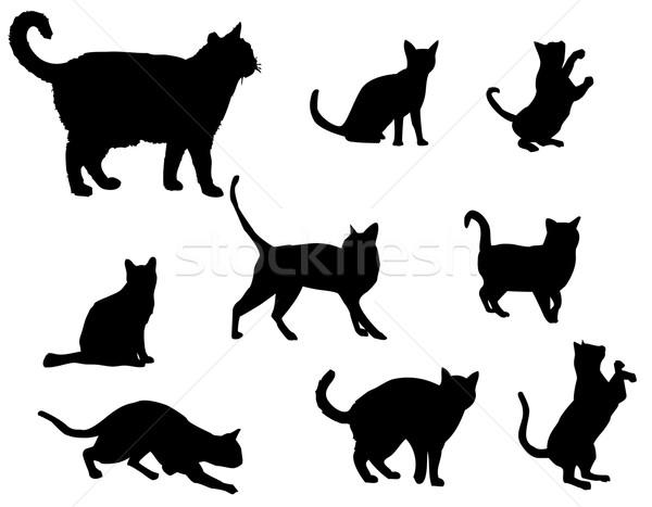 Cats Stock photo © Nevenaoff