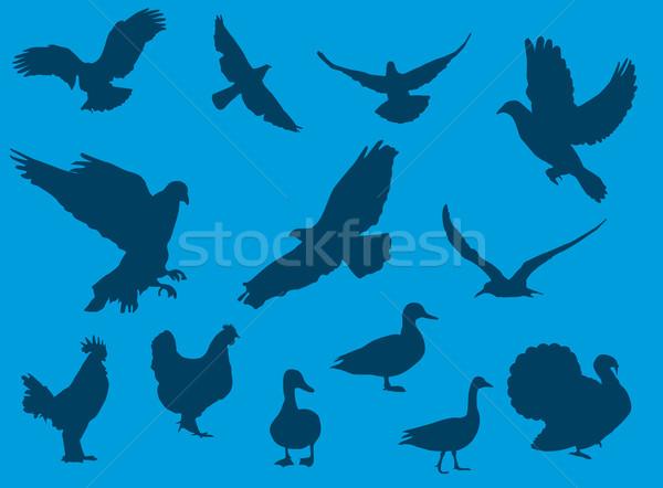 Kuşlar siluetleri kartal güvercin beyaz hayvan Stok fotoğraf © Nevenaoff